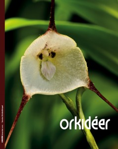 Orkideer-12-2012