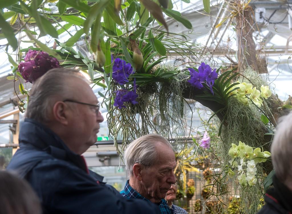 En fantastisk orkidéblomning mötte oss, orkidéer högt som lågt.
