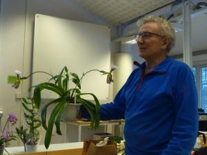 Lars visar upp Paphiopedilum Leeanum.